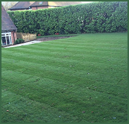 Garden lawn and turfing